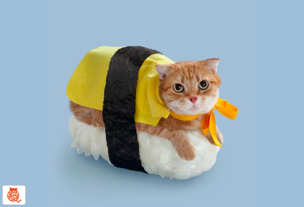 sushi_cat_update.7